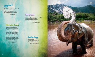 Animal Poetry_Elephant1