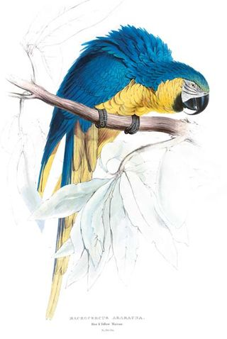 Blue-yellow-macaw-c2a9-taschen